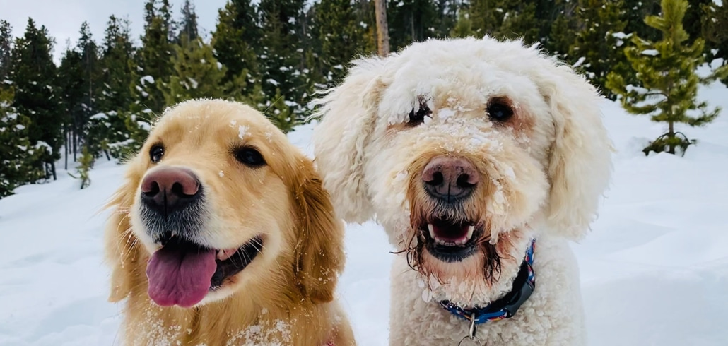 2 dogs in the snow